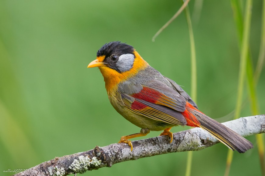 حديقة الطيور كوالالمبور بماليزيا