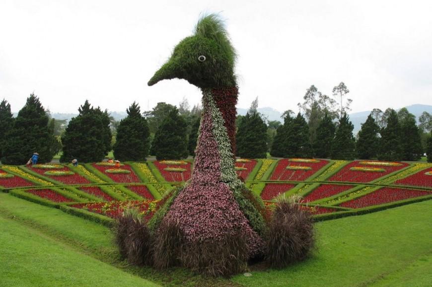 حديقة الزهور بونشاك اندونيسيا