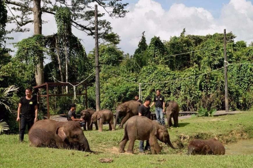 محمية لوك كاوي البرية في ولاية صباح بماليزيا