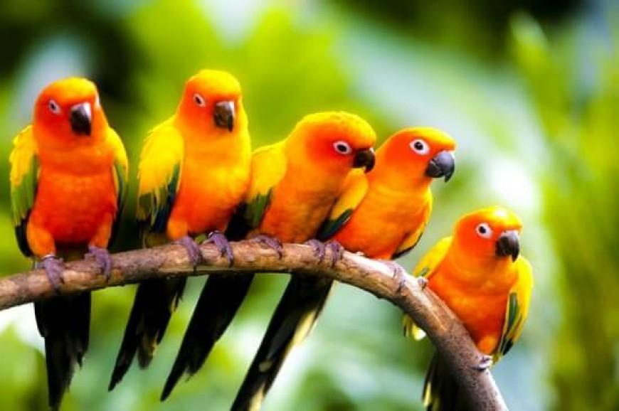 حديقة الحيوان والطيور في لنكاوي بماليزيا