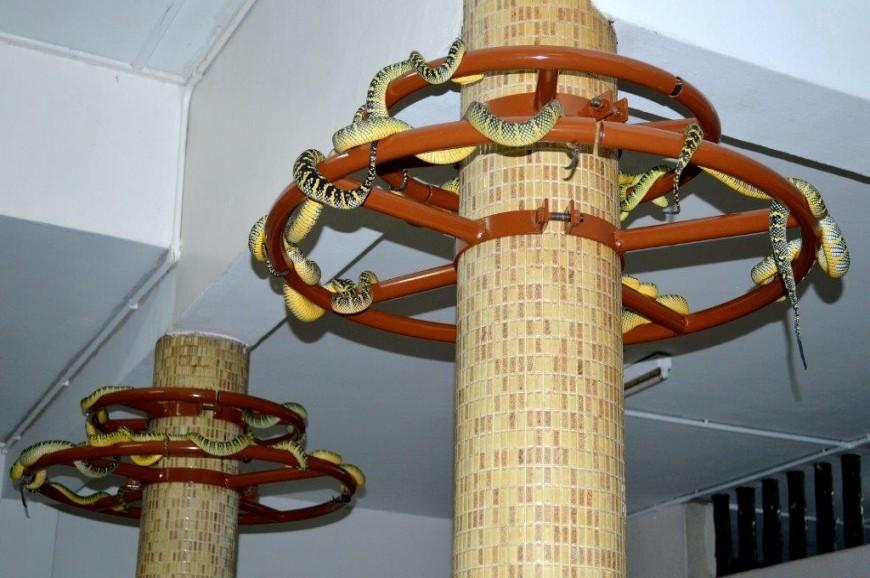 معبد الأفاعي بينانج ماليزيا