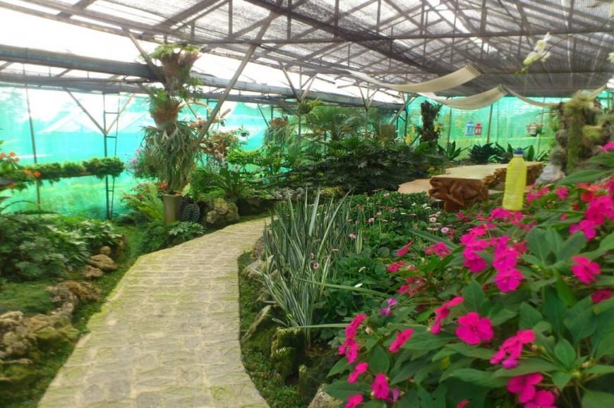 حديقة تامان ماتاهاري بونشاك اندونيسيا