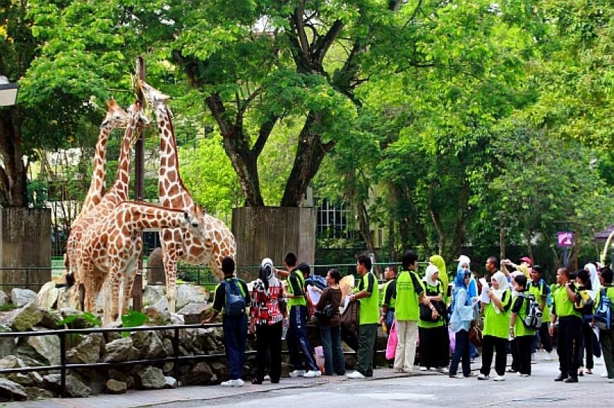 حديقة حيوانات نيجارا في كوالالمبور ماليزيا, حديقة الحيوان كوالالمبور