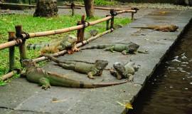 حديقة الزواحف في بالي اندونيسيا