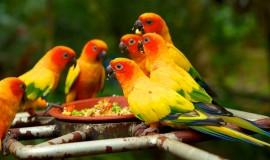 متنزه يورونغ للطيور سنغافورة