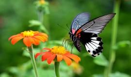 حديقة الفراشات في كوالالمبور بماليزيا