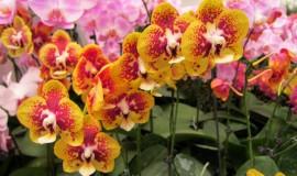 حديقة الزهور كوالالمبور بماليزيا
