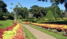 حديقة الزهور والقرود في جزيرة بينانج بماليزيا
