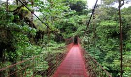الغابات المطيرة في ولاية صباح بماليزيا