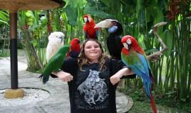 حديقة الطيور في بالي اندونيسيا