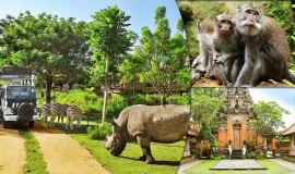 حديقة الحيوان بالي اندونيسيا