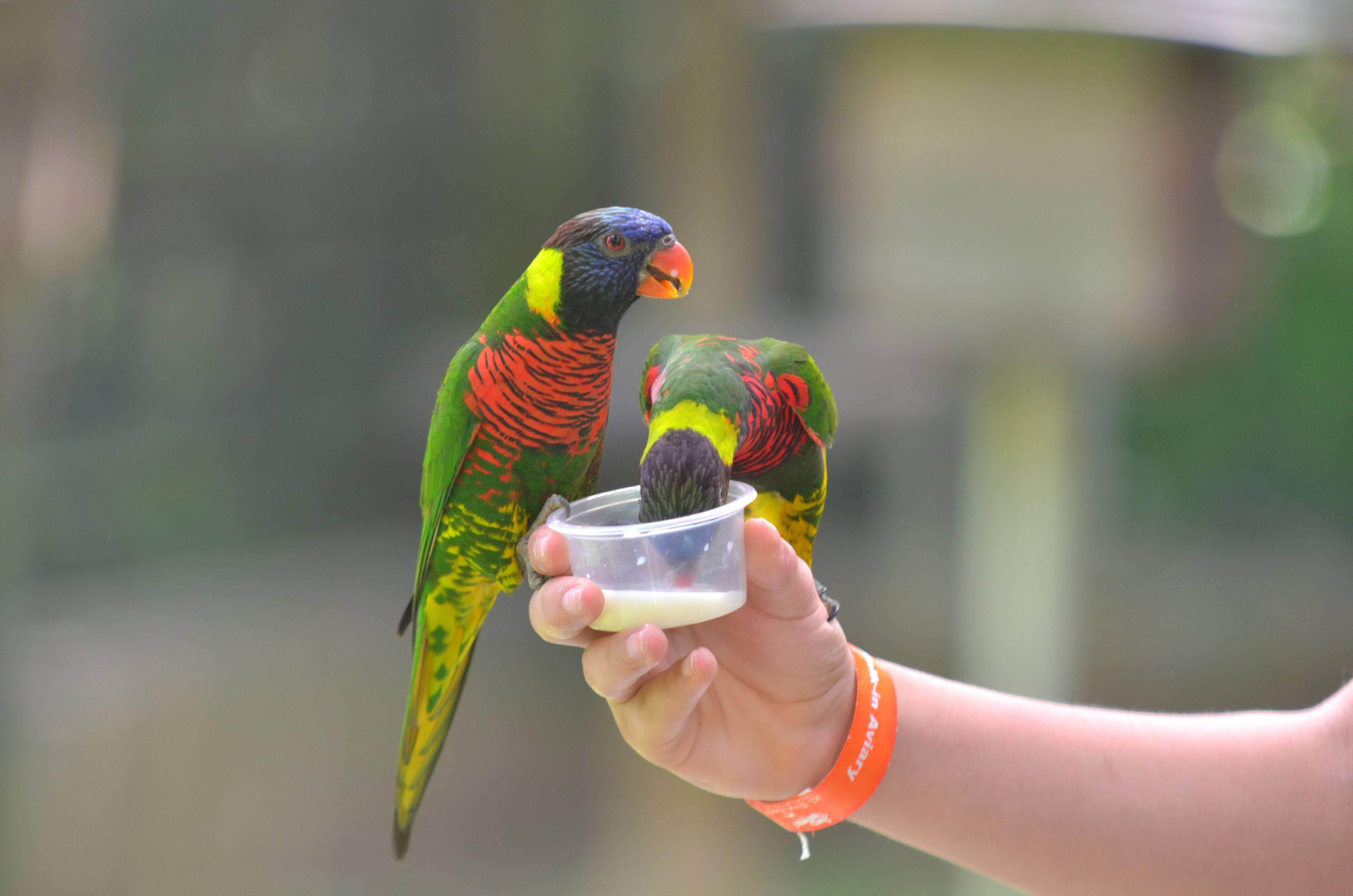 حديقة الطيور كوالالمبور ماليزيا